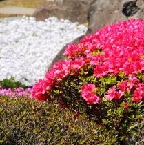 四季折々、朝、夕、様々な魅力にあふれている、諏訪湖。