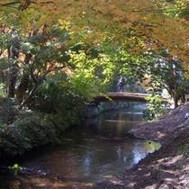 紅葉と金鱗湖イメージ1