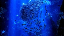 【京都水族館】海のいきもの達による幻想的な空間
