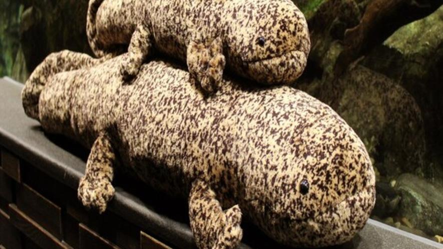 【京都水族館】京都水族館イチオシのオオサンショウオはこどもから大人まで大人気!