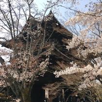 【東山】蹴上インクライン沿いに歩いて約5分の南禅寺。境内の水路閣も有名でございます。