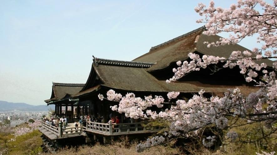 清水寺の桜は例年3月下旬~4月中旬が見頃です