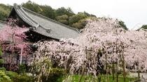【山科】当ホテルから徒歩圏内の桜の名所。毘沙門堂にて枝垂桜をお楽しみくださいませ