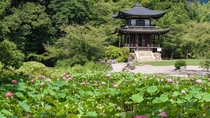 【山科】当ホテルから地下鉄・徒歩にて約15分の勧修寺。春は桜、夏は蓮が見所でございます