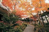 玄関廻りの紅葉