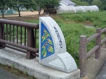 矢掛町宇内地区のホタルは、毎年数えきれないくらい♪