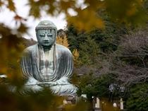 ■秋 鎌倉大仏と紅葉