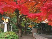 ■秋 鎌倉宮