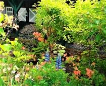 山野草や自生のレンゲツツジ・花々が咲く花壇