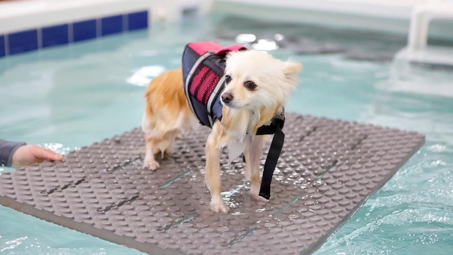 【ドッグフィットネス】リラク、筋力増進、アクアフィットネスを愛犬1頭1頭に合わせた運動を行います