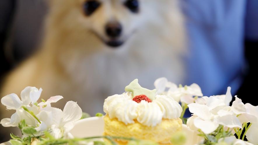 愛犬のお誕生日&うちの子記念祝いを!(予約時 要連絡)愛犬用手作りケーキ&お写真のプレゼント♪