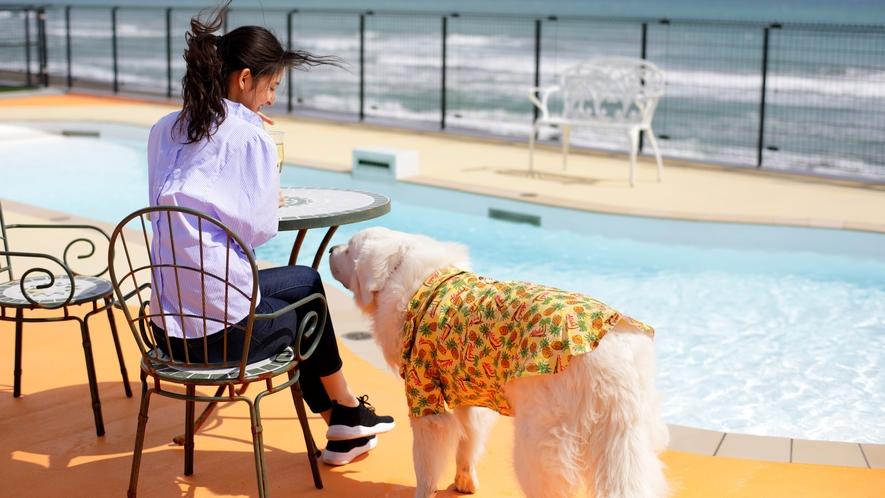 潮風にあたりながら、愛犬の泳ぐ様子をゆったりと見つめて