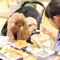 【夕食】「あーん。おいしい?」わんちゃん専用のお食事もご用意があります(当日要予約)