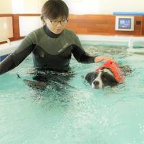 【ドッグフィットネス】一流スポーツ選手がトレーニングやリハビリに使用する本格的な流水プール