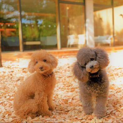 【朝食付】愛犬と過ごす深いくつろぎと贅沢な時間/夕食なし/21時までチェックインOK!