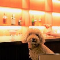 【バーラウンジ】愛犬とバーカウンターに座れる夢のようなひととき