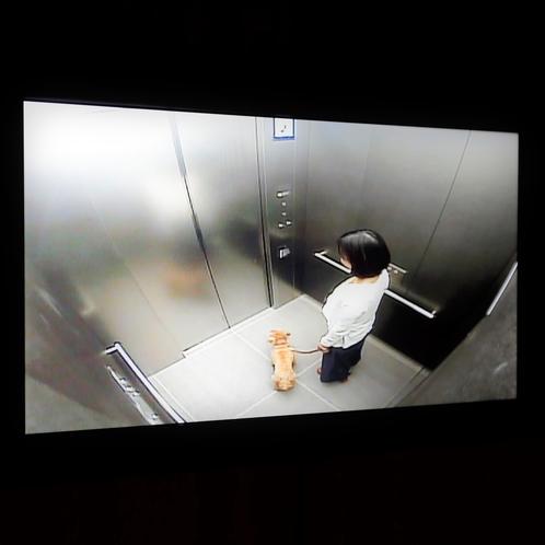 【エレベーター】エレベーターでのワンちゃん同士の接触防止のために各階にモニターがついています