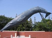 国立科学博物館のシロナガスクジラ - National Museum of Nature and S