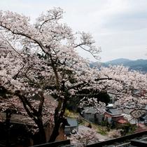 【別館 10畳】からの眺望・・・満開の桜