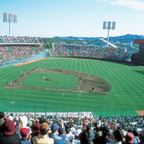 *野球観戦はサンマリンスタジアムで!