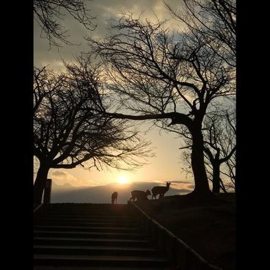 ほんまに奈良って良いなー秋の若草山に黄昏〜スタッフ一押し〜