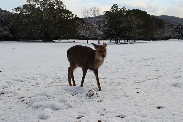 今年は三笠でほっこりクリスマスを
