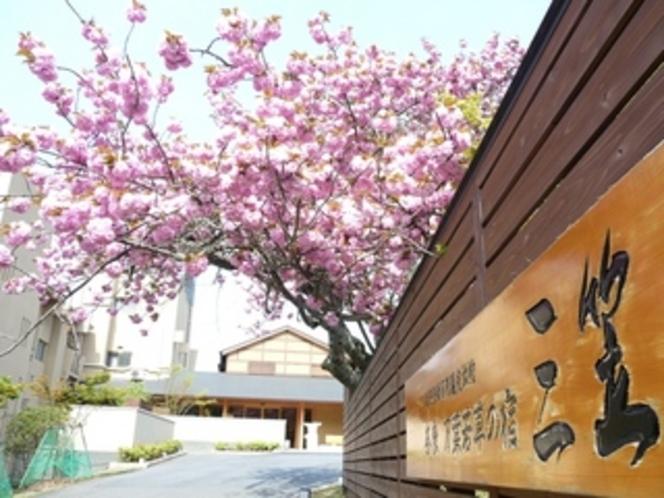 玄関前の八重桜【2010年4月26日撮影】