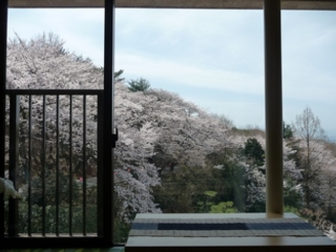 ロビーからの桜♪【2010年4月4日撮影】