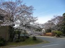 『奈良 万葉若草の宿 三笠』の桜