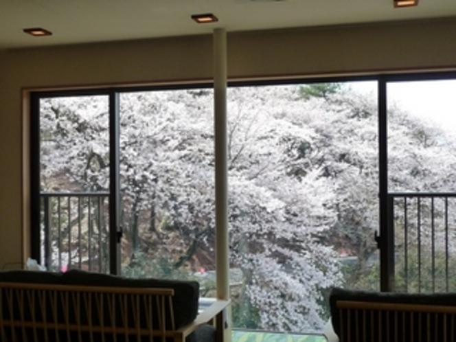 ロビーからの桜♪満開ですTOP【2010年4月4日撮影】