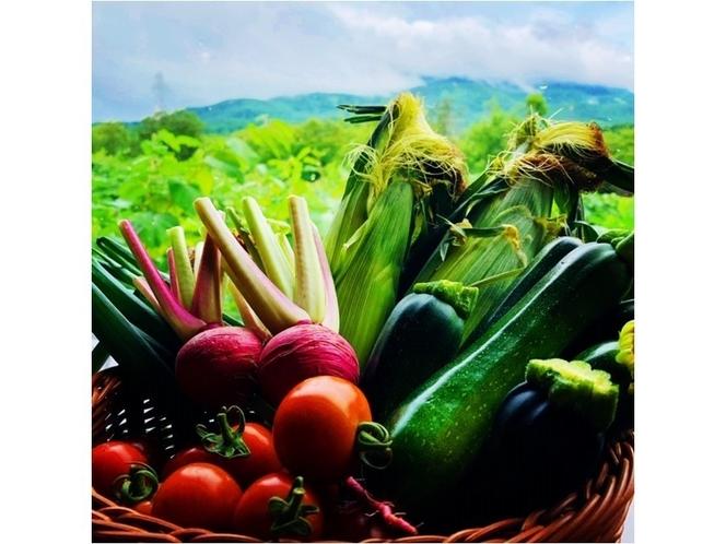 ニセコ産野菜