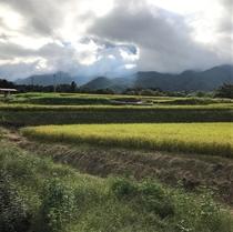 水田と山と雲