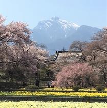春の実相寺