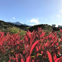 ロビンと甲斐駒ヶ岳