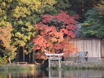 金鱗湖の紅葉の様子。天祖神社方面にて。