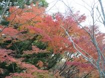 金鱗湖の紅葉の様子です。