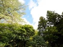 緑に囲まれた静かな場所に立地しています。
