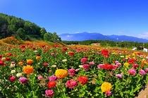 富士見高原リゾート・花の里①(7月頃~)