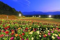 富士見高原リゾート・花の里②(7月頃~)