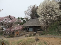 高森観音堂② (4月中旬~)