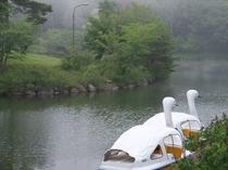 霧の中の鹿の池