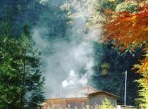 薪ストーブの煙突から立ち上るモクモクした煙が森の晩秋~冬を彩る。