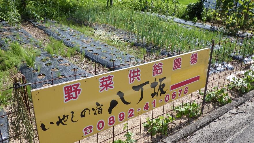 野菜供給自家農場「八丁農園」