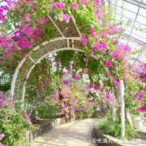 アロハガーデンたてやま 色鮮やかな南国のお花が楽しめます♪
