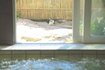 お風呂の隣のお庭に遊びに来たにゃんこ
