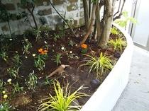 海岸側のミニ花壇
