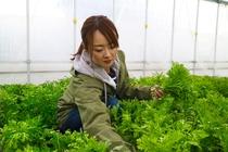 旬のオーガニック野菜を収穫 3日前までご予約を承ります。