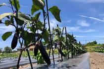 太陽の下で旬の野菜を収穫。連泊や早く到着される方におすすめ!3日前までご予約ができます。