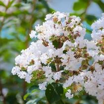 前庭の花たち