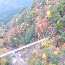 10月下旬から11月中旬は見事な紅葉が見られます
